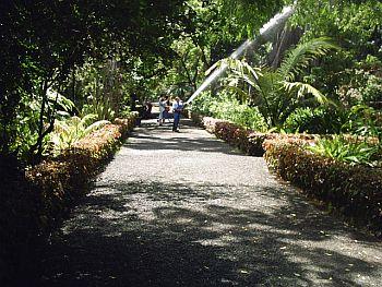 Botanical gardens puerto de la cruz - Botanical garden puerto de la cruz ...