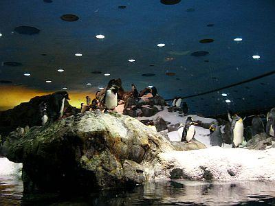 Penguins Loro Park