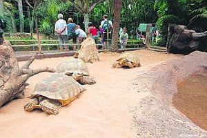 Giant tortoises at Loro Park, Tenerife