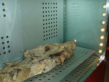 Guanche mummy
